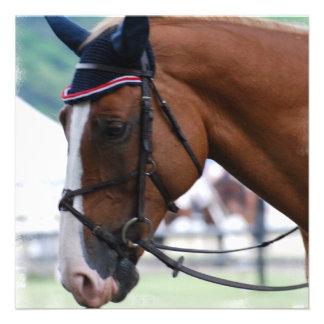Dutch Warmblood Horse Invitations