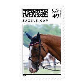 Dutch Warmblood Horse Postage Stamp