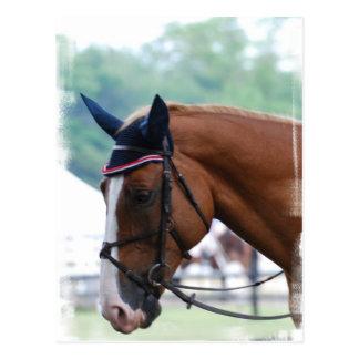 Dutch Warmblood Horse Postcard