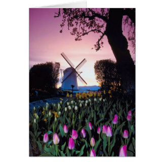 Dutch Windmill at Sunset in Holland Notecards Card