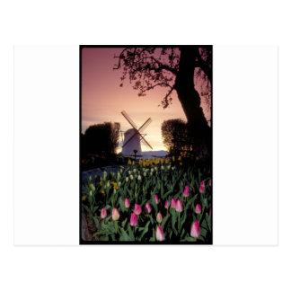 Dutch windmill & flowerbeds postcard