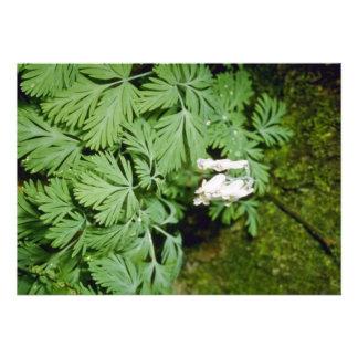 Dutchman's Breeches (Dicentra Cucllaria) fl Personalized Invitation