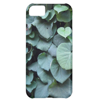 Dutchman's Pipe leaves iPhone 5C Cover