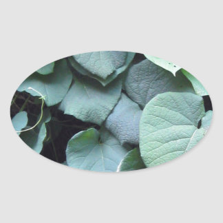 Dutchman's Pipe leaves Oval Sticker
