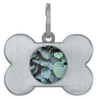 Dutchman's Pipe leaves Pet Name Tags