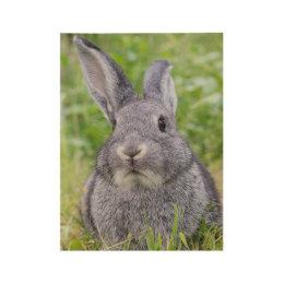 Dwarf bunny rabbit wood poster