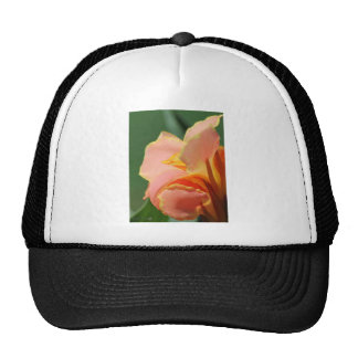 Dwarf Canna Lily named Corsica Trucker Hat