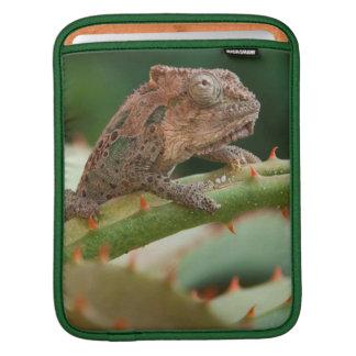 Dwarf Chameleon (Brookesia Exarmata), Algoa Bay iPad Sleeve
