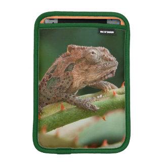 Dwarf Chameleon (Brookesia Exarmata), Algoa Bay Sleeve For iPad Mini