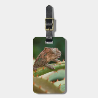 Dwarf Chameleon (Brookesia Exarmata), Algoa Bay Tag For Luggage