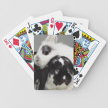 Dwarf-eared rabbit leaning over lop-eared bicycle playing cards