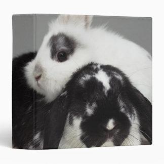 Dwarf-eared rabbit leaning over lop-eared binder