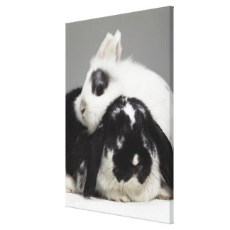 Dwarf-eared rabbit leaning over lop-eared canvas print