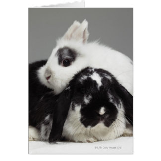 Dwarf-eared rabbit leaning over lop-eared cards