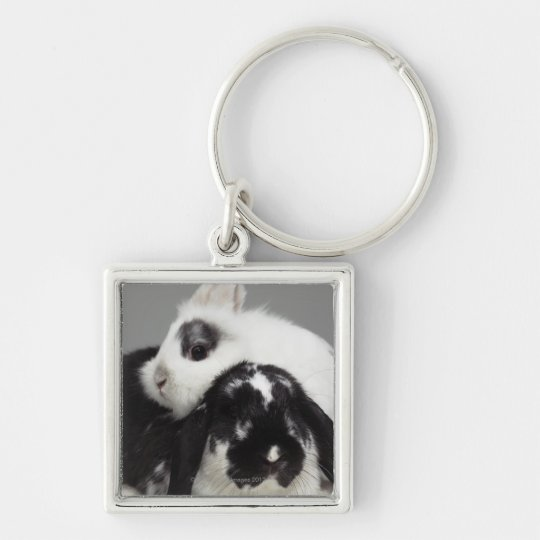 Dwarf-eared rabbit leaning over lop-eared keychain