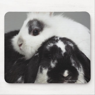 Dwarf-eared rabbit leaning over lop-eared mouse pad