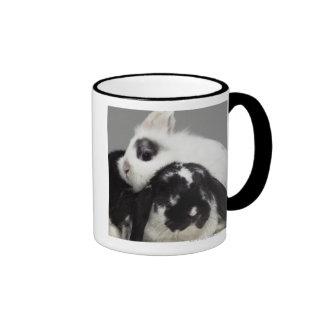 Dwarf-eared rabbit leaning over lop-eared mug