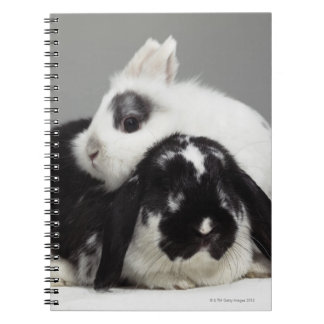 Dwarf-eared rabbit leaning over lop-eared journals