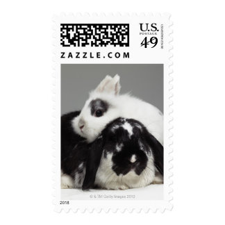 Dwarf-eared rabbit leaning over lop-eared postage