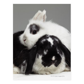 Dwarf-eared rabbit leaning over lop-eared postcard