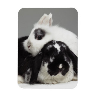 Dwarf-eared rabbit leaning over lop-eared rectangular photo magnet
