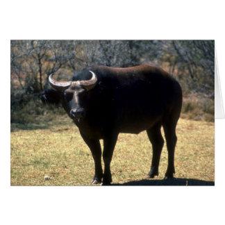 Dwarf Forest Buffalo-black phase Greeting Cards