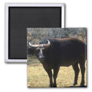 Dwarf Forest Buffalo-black phase Refrigerator Magnets