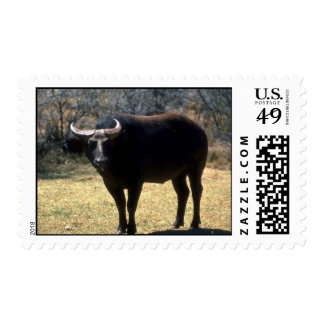 Dwarf Forest Buffalo-black phase Postage Stamps