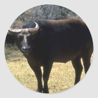 Dwarf Forest Buffalo-black phase Round Stickers