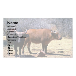 Dwarf Forest Buffalo pair showing red and black ph Business Cards