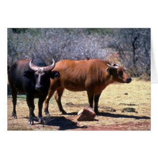 Dwarf Forest Buffalo pair showing red and black ph Cards