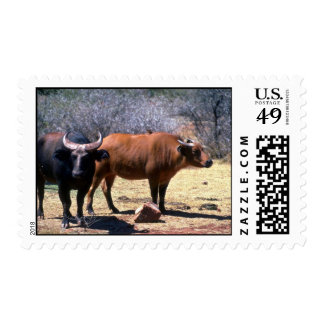 Dwarf Forest Buffalo pair showing red and black ph Postage Stamp