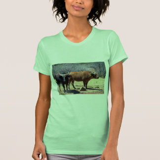 Dwarf Forest Buffalo pair showing red and black ph Tees