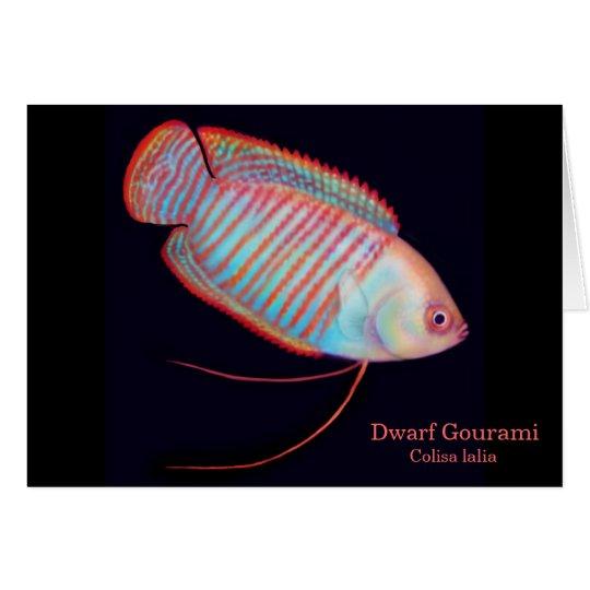 Dwarf Gourami Tropical Fish Card