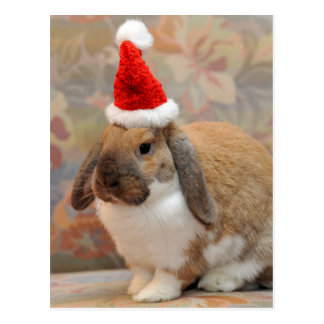 Dwarf lop bunny or rabbit postcard