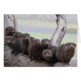 Dwarf Mongoose Pack Card
