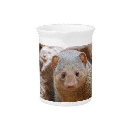 Dwarf Mongoose Pitcher