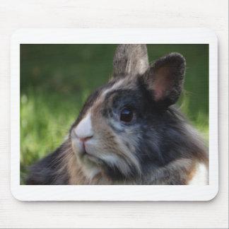 dwarf-rabbit-978y mouse pad