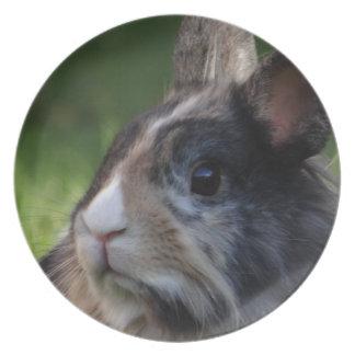 dwarf-rabbit-978y plate