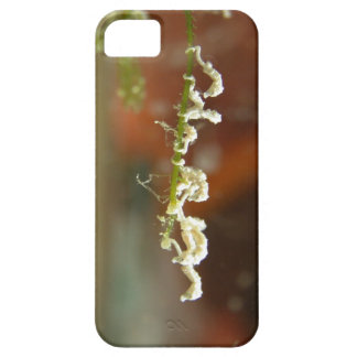 Dwarf Seahorse Babies iPhone 5 Covers