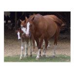 DX- postal hermosa de los caballos