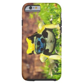 Dyeing Poison Frog, Dendrobates tinctorius, Tough iPhone 6 Case