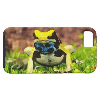 Dyeing Poison Frog, Dendrobates tinctorius, iPhone 5 Case