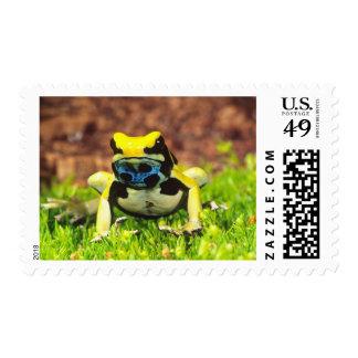 Dyeing Poison Frog, Dendrobates tinctorius, Postage
