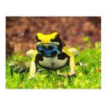 Dyeing Poison Frog, Dendrobates tinctorius, Post Card
