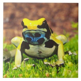 Dyeing Poison Frog, Dendrobates tinctorius, Tile
