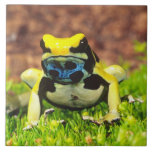 Dyeing Poison Frog, Dendrobates tinctorius, Tiles