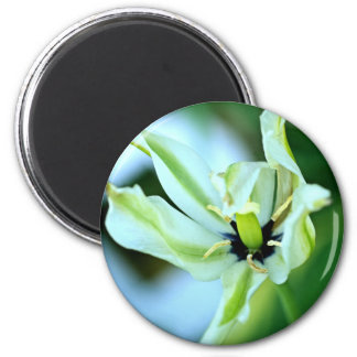 Dying tulip 2 inch round magnet