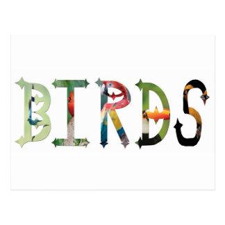 Dymond Speers BIRDS POSTCARD