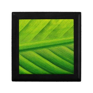 Dynamite Green Gift Box